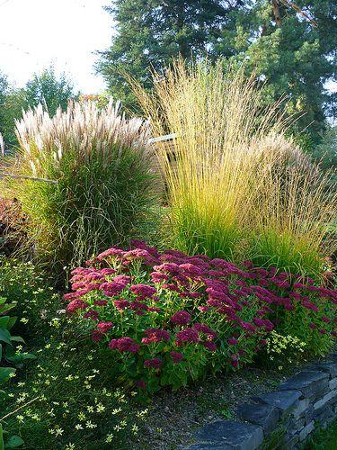 Zahrada - inspirace - dole drobné kytičky by mohl být lomikámen vždyživý (Saxifraga granulata), tmavo-růžově kvetoucí rozchodník (sedum), ozdobnice (miscanthus, může být např. Gracillimus, hezká je i Graziella), bezkolenec (molinia)