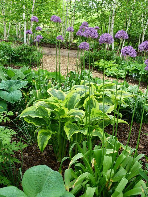 Zahrada - inspirace - a zase bohyšky :-) + okrasný česnek