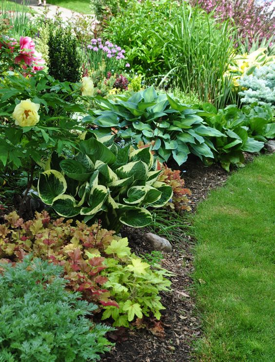 Zahrada - inspirace - dlužichy a hosty (bohyšky), vlevo nahoře vykukuje žlutý květ dřevité pivoňky a nad ní pravděpodobně ještě další růžový kultivar