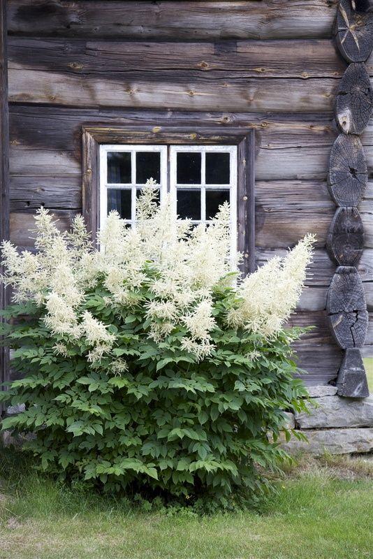 Zahrada - inspirace - udatna - má ráda polostín/stín a vlhčí místa