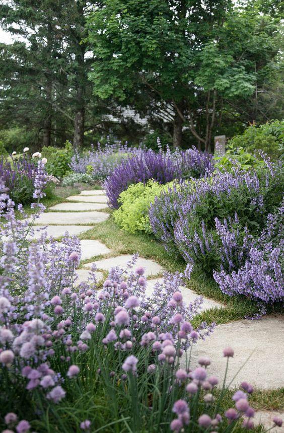 Zahrada - inspirace - pažitka, šanty, šalvěje, kontryhel