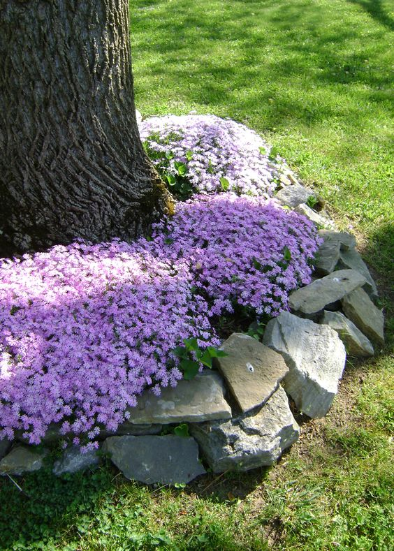 Zahrada - inspirace - skalkové floxy jako podsadba