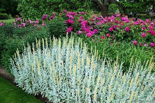 Zahrada - inspirace - Obrázek č. 41