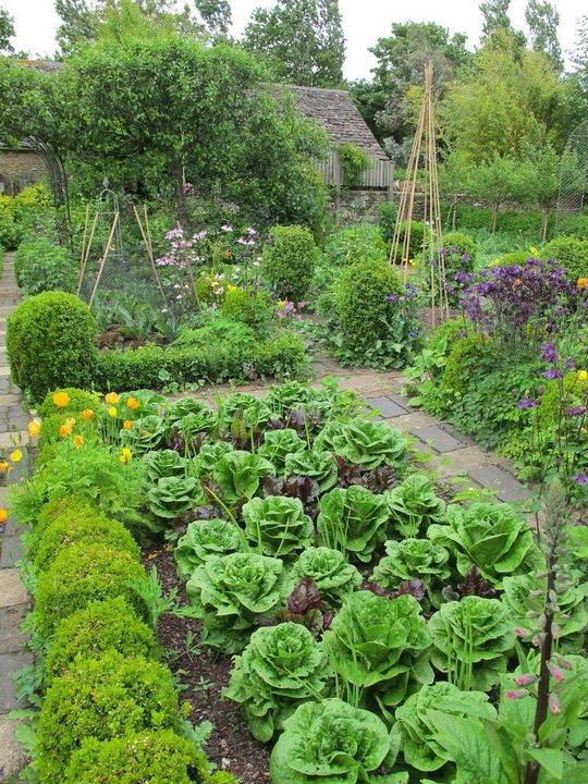 Zahrada - inspirace - tak takto úhlednou zeleninovou zahradu já nikdy mít nebudu :-)