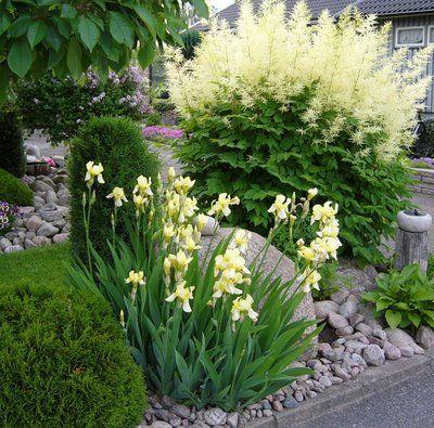 Zahrada - inspirace - kosatce a udatna