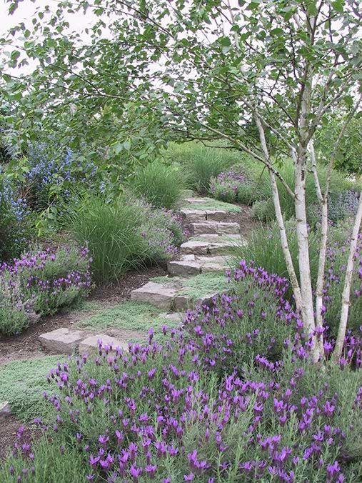 Zahrada - inspirace - levandule a okrasné trávy