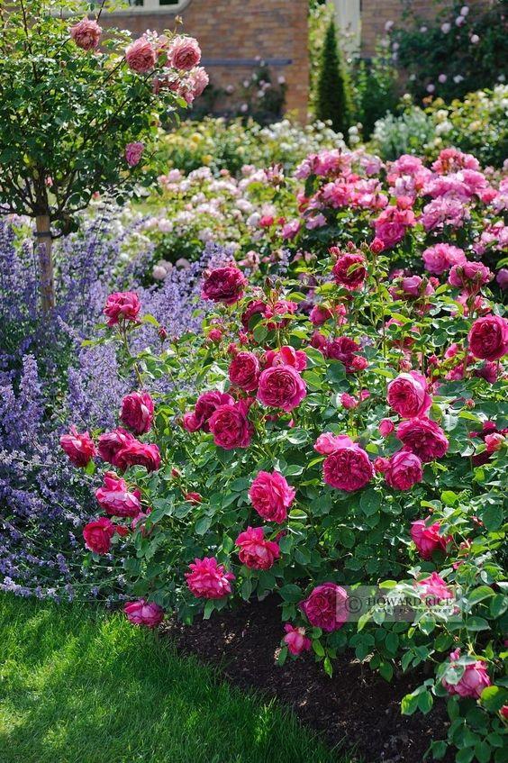 Zahrada - inspirace - růže a šanta