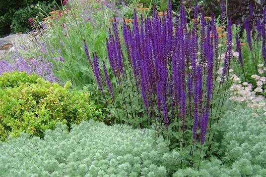 Zahrada - inspirace - pelyněk a šalvěj