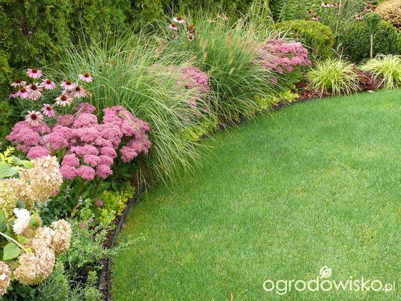 Zahrada - inspirace - hortenzie, echinacea, rozchodníky, a pravděpodobně nějaký kultivar dochanu (vousatce, pennisetum), vzadu nižší tráva může být rákosovka (Hakonechloa))
