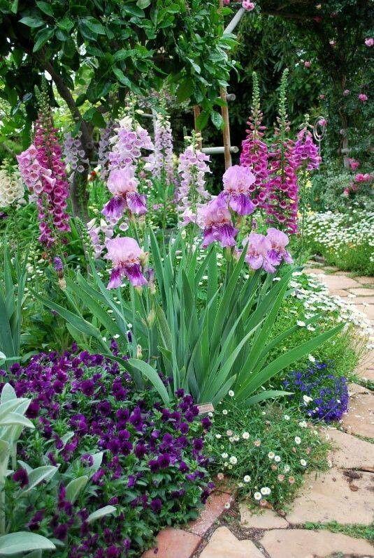 Zahrada - inspirace - macešky, náprstník, kosatce