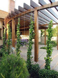 Zahrada - inspirace - Obrázek č. 169