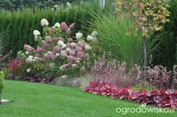Zahrada - inspirace - červené dlužichy, javor, vzadu ozdobnice, dále pokračuje nízká kostřava, další dlužichy, nad nimi hortenzie latnatá