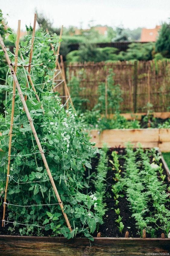 Zahrada - inspirace - Obrázek č. 146