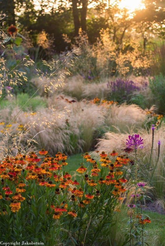 Zahrada - inspirace - podzim - záplevák a trávy