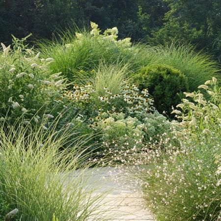 Zahrada - inspirace - okrasné trávy, bílá třapatovka, bílá komule davidova a gaura (svíčkovec), vzadu hortenzie latnatá, mohlo by jít o lime light.