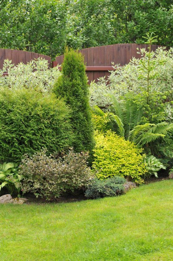 Zahrada - inspirace - vzadu svída bílá Variegata, vepředu bohyšky, kapradina pérovník, dole vlevo pravděpodobně azalka, žluté tavolník, jehličnany cypřišky a smrk pichlavý