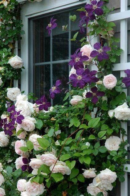 Zahrada - inspirace - moc se mi líbí spojení růže s plaménkem