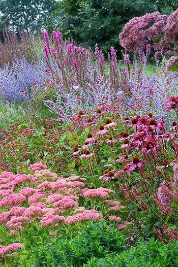 Zahrada - inspirace - rozchodník, echinacea, perovskie, a vpravo vykukuje sadec