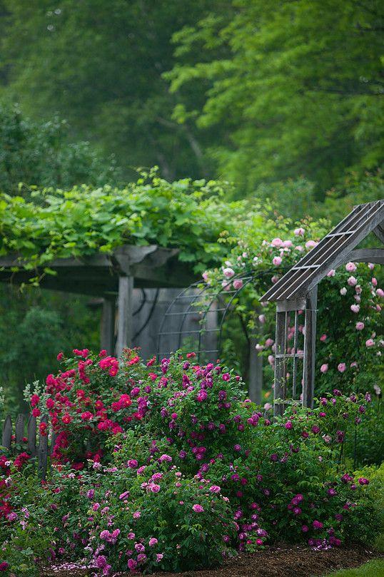 Zahrada - inspirace - v hlavní roli růže