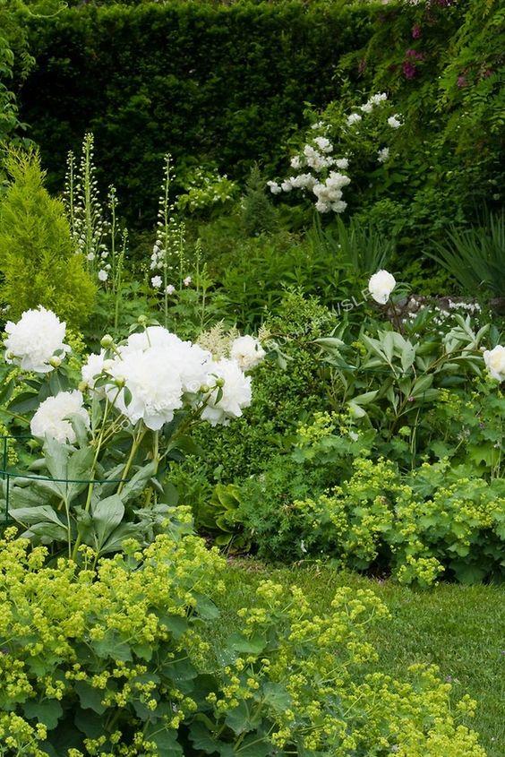 Zahrada - inspirace - kontryhel a pivoňky