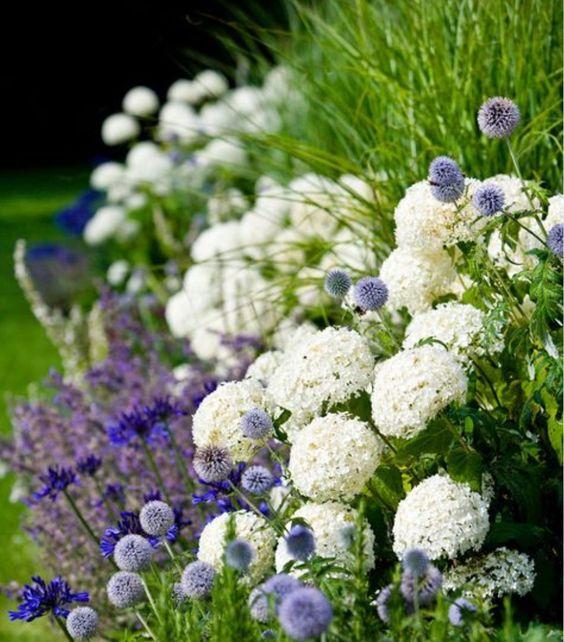 Zahrada - inspirace - chrpa, hortenzie, bělotrn, okrasná tráva (ozdobnice)