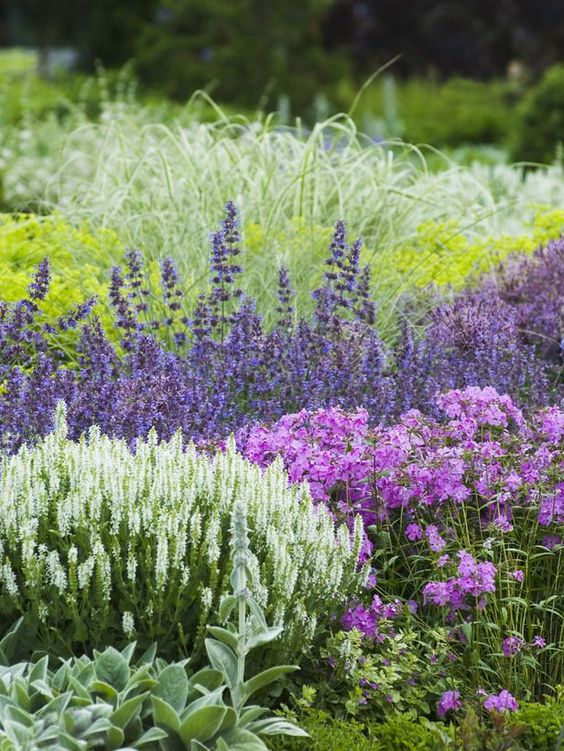 Zahrada - inspirace - čistec, rozrazil, šanta, vzadu žluté možná kontryhel, růžovo-fialové by mohly být floxy