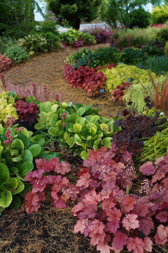 Zahrada - inspirace - dlužichy, bergénie a okrasné trávy (tipuju - rákosík japonský )