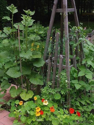 Zahrada - inspirace - Obrázek č. 194