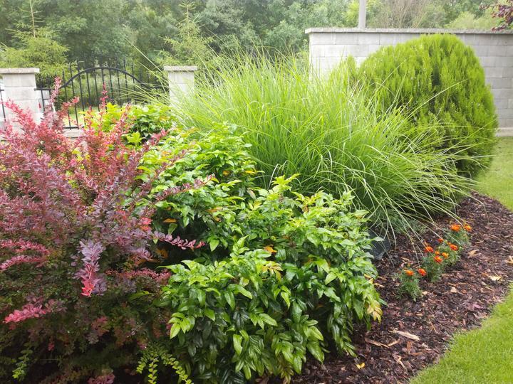 Zahrada - inspirace - Obrázek č. 67