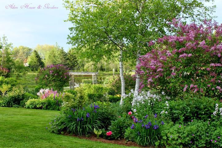 Zahrada - inspirace - bříza v zahradě je nádherná