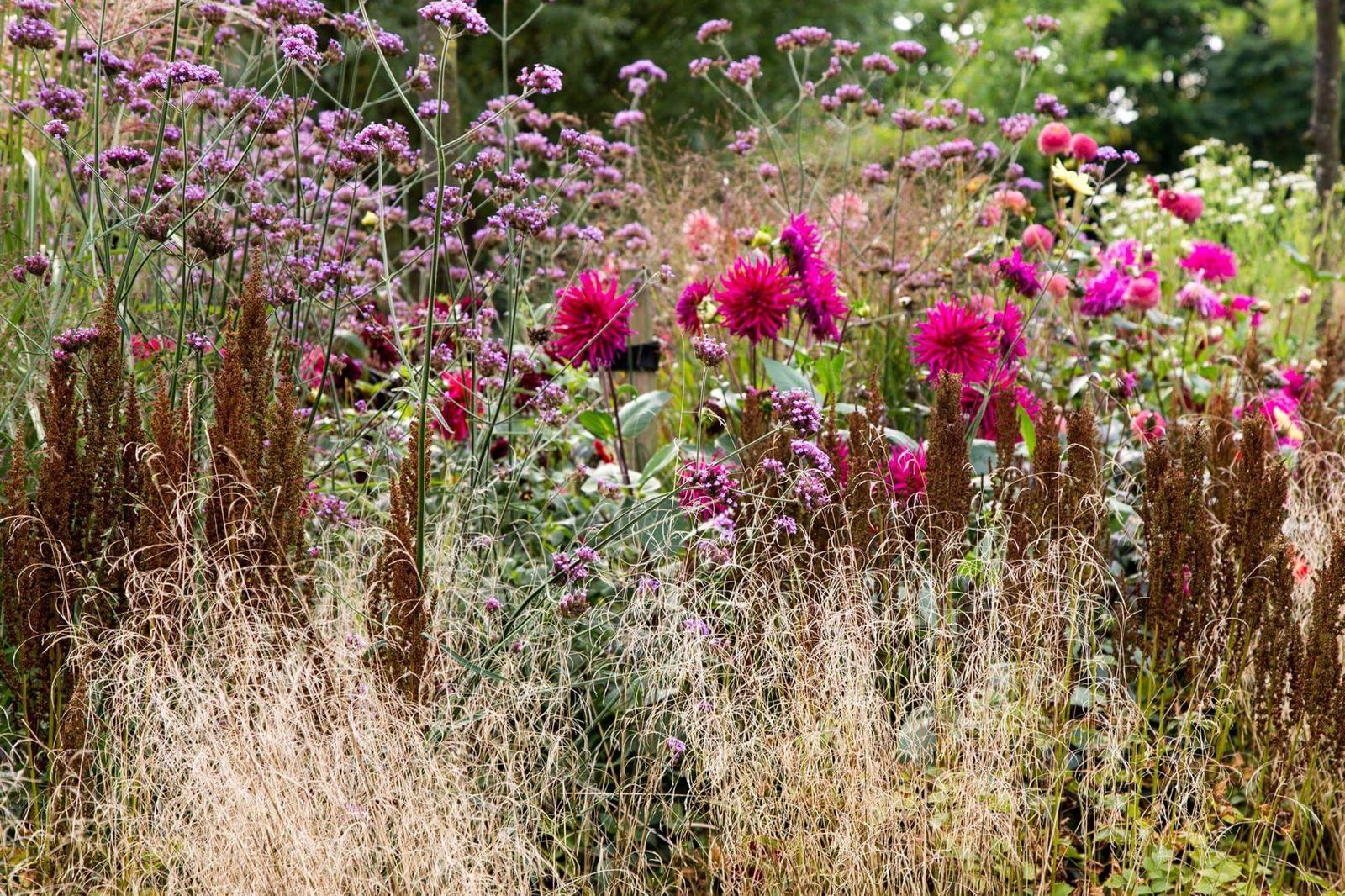 Zahrada - inspirace - opět sporýš + jiřinky + okrasné trávy