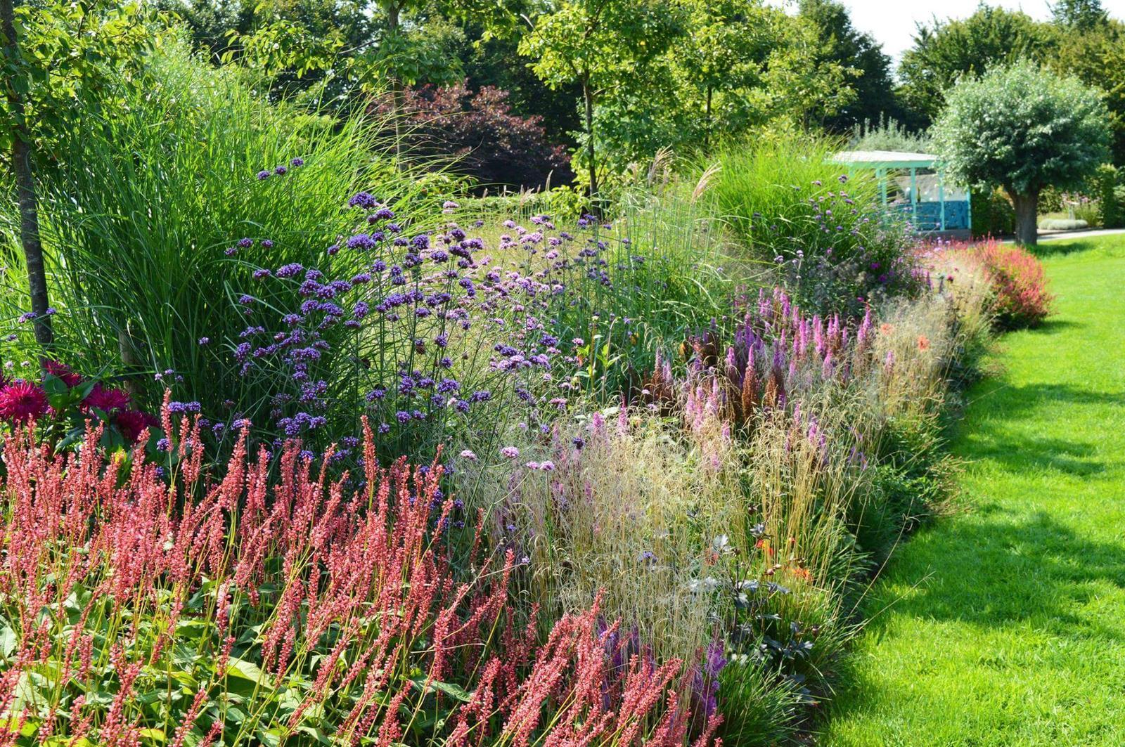 Zahrada - inspirace - moc hezká kombinace trvalek + letniček, resp. letničky - fialová vysoká kytka sporýš argentinský (Verbena bonariensis), dokáže se na místě udržet několik let samovýsevem .. a když ne na místě, tak aspoň na zahradě :-D