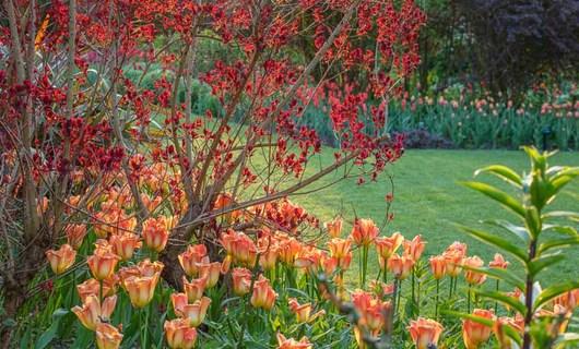 Zahrada - inspirace - Tulipány tulipány tulipány ❤️
