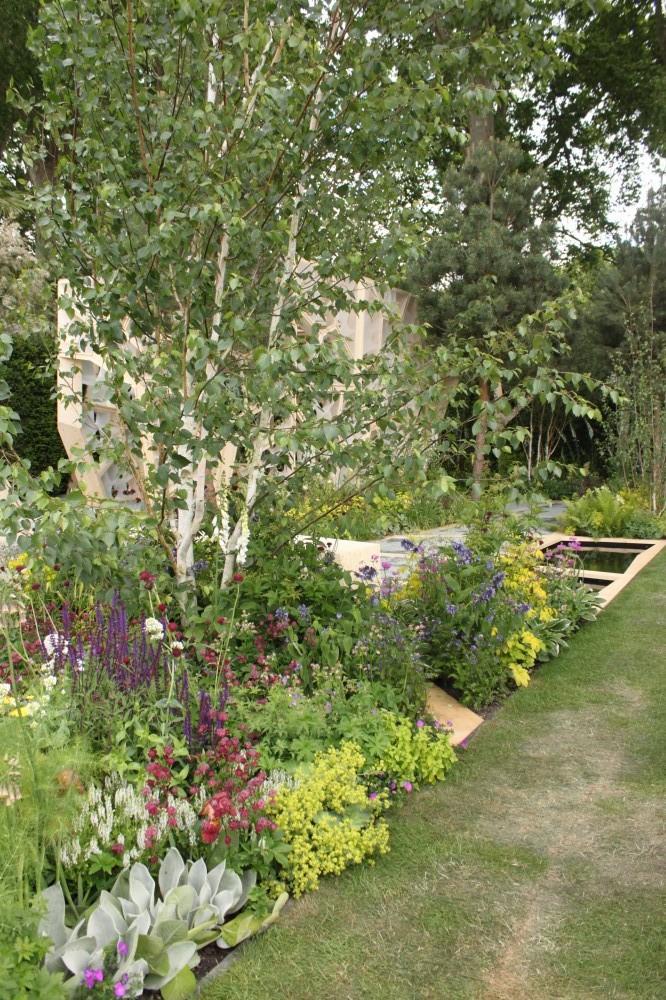 Zahrada - inspirace - Bříza