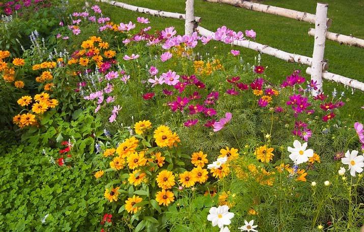Zahrada - inspirace - krásenky - uvažuji nad nima do zahrady