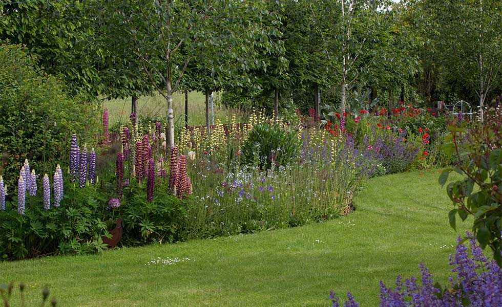 Zahrada - inspirace - lupiny (vlčí bob), pamatuju z dětství, u babičky jich byla plná louka, existuje opravdu hodně barev
