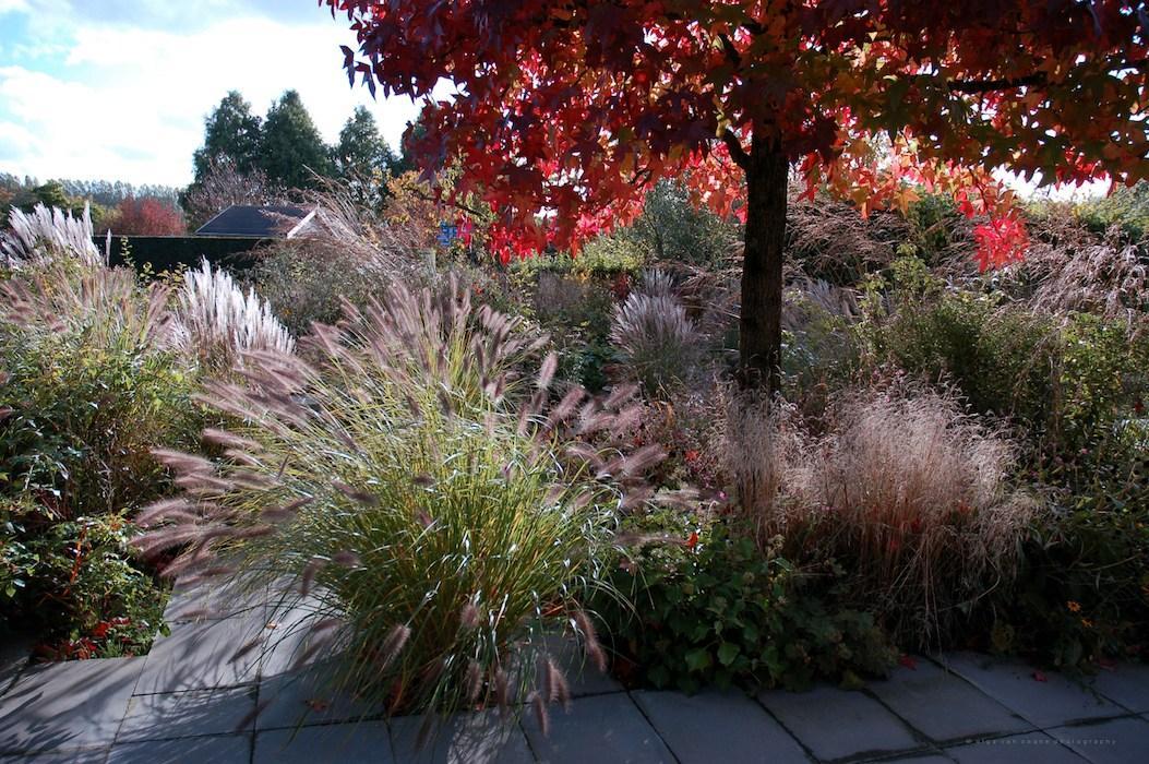 Zahrada - inspirace - v hlavní roli trávy a sekunduje ambroň v krásném podzimním červeném zbarvení