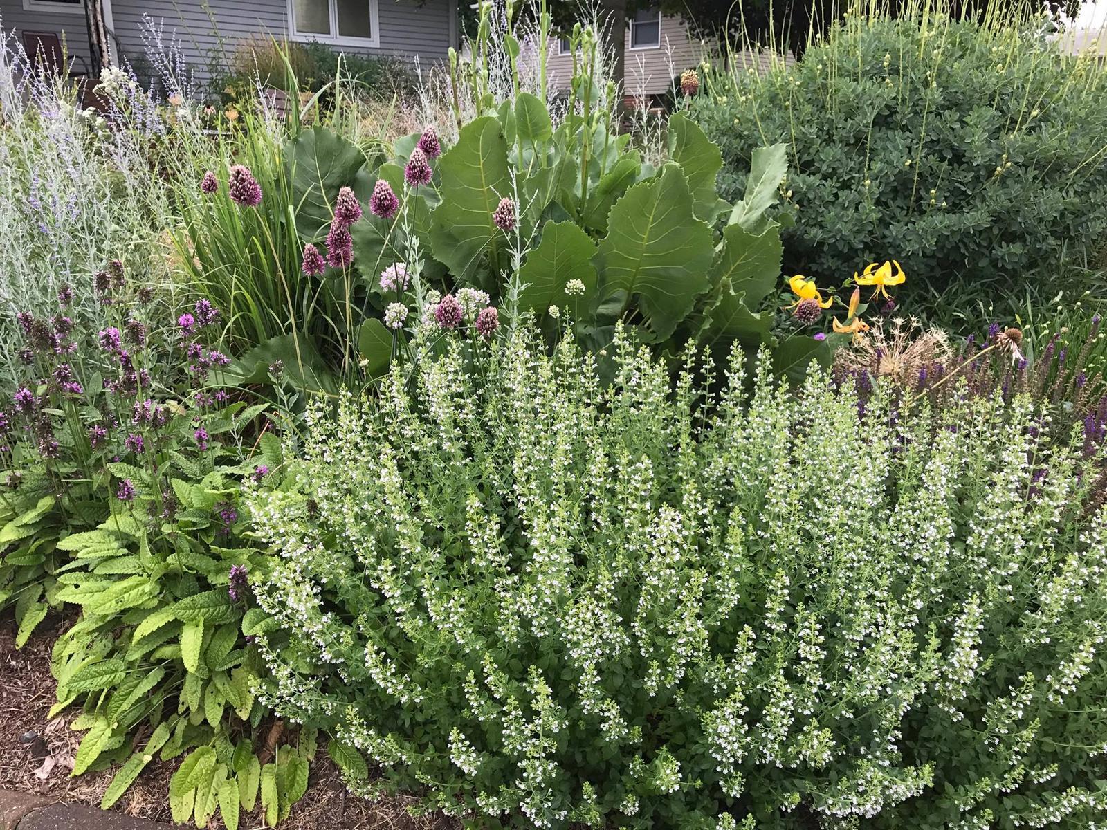 Zahrada - inspirace - Obrázek č. 86