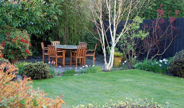Zahrada - inspirace - ta bříza je nádherná, pravděpodobně je to bříza himalájská (jacquemontii)