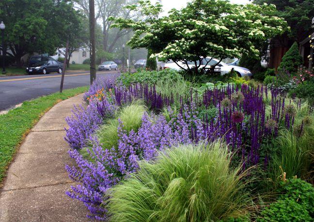 Zahrada - inspirace - Šanta, kavyl, šalvěj, okrasné česneky, vzadu bíle kvetoucí strom tipuji na dřín japonský (Cornus kousa)