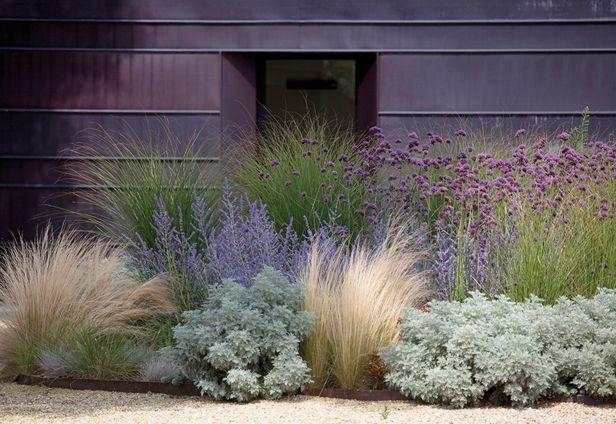 Zahrada - inspirace - okrasné trávy - nejnižší kostřava, dále kavyl a vzadu ozdobnice. Stříbrný by mohl být pelyněk, vzadu fialová perovskie a fialové bambulky sporýš argentinský (u nás spíše letnička, ale může se na záhoně udržovat samovýsevem)