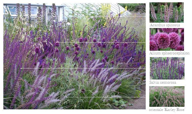 Zahrada - inspirace - Obrázek č. 316