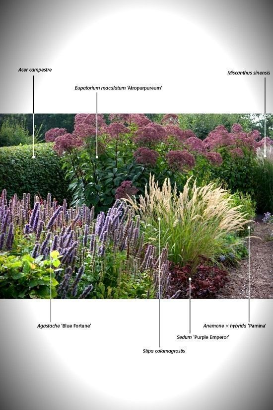 Zahrada - inspirace - Obrázek č. 318
