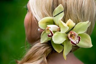 A zase ta orchidej
