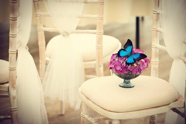 Svadba inšpirovaná krásou motýľov - stoličky