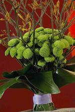 zelené chryzantémy
