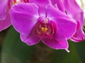 kytica bude určite z orchideí