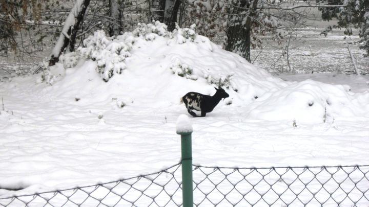 Domeček - Jak v říjnu napadl sníh :)