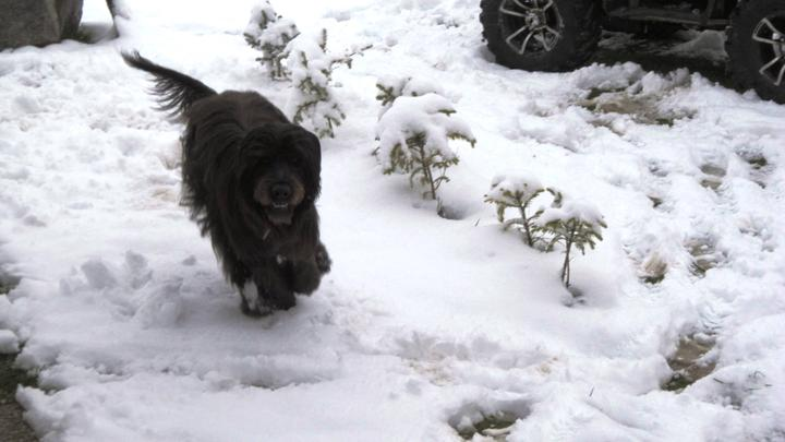 Domeček - jak v řijnu napadl sníh :)