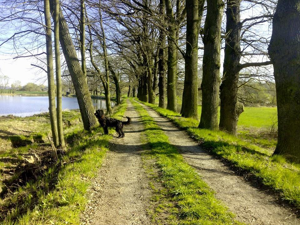 Domeček - ranní procházky